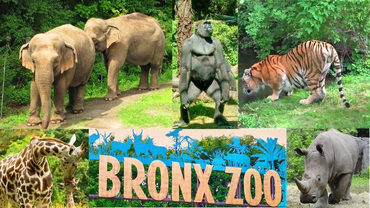 Zoo In Long Island Ny
