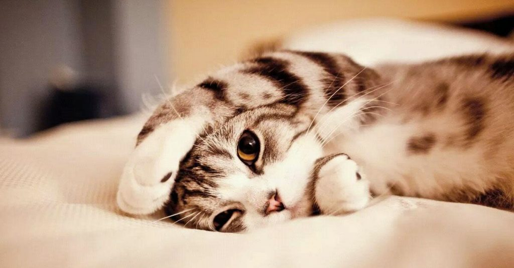 Paw-some Facts About Cats