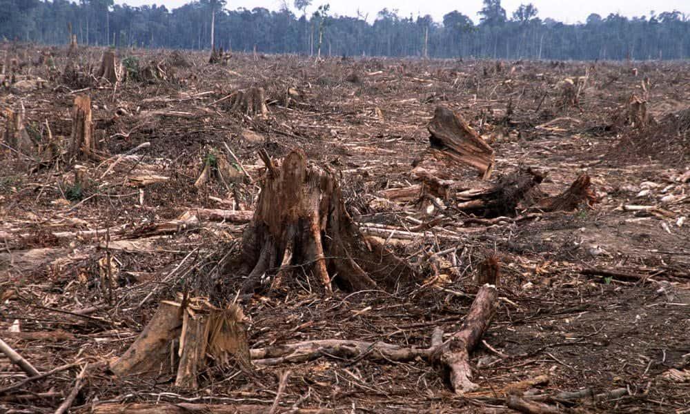 deforestation-causes