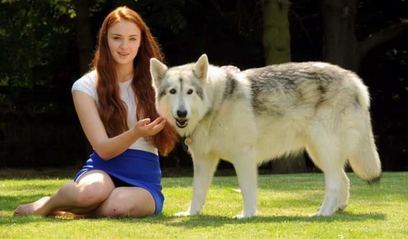 Sansa lady