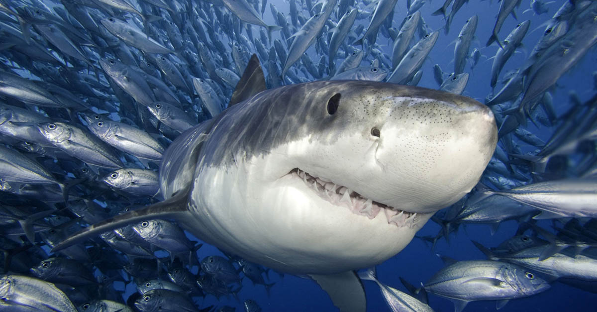 30 Finteresting Facts About Sharks