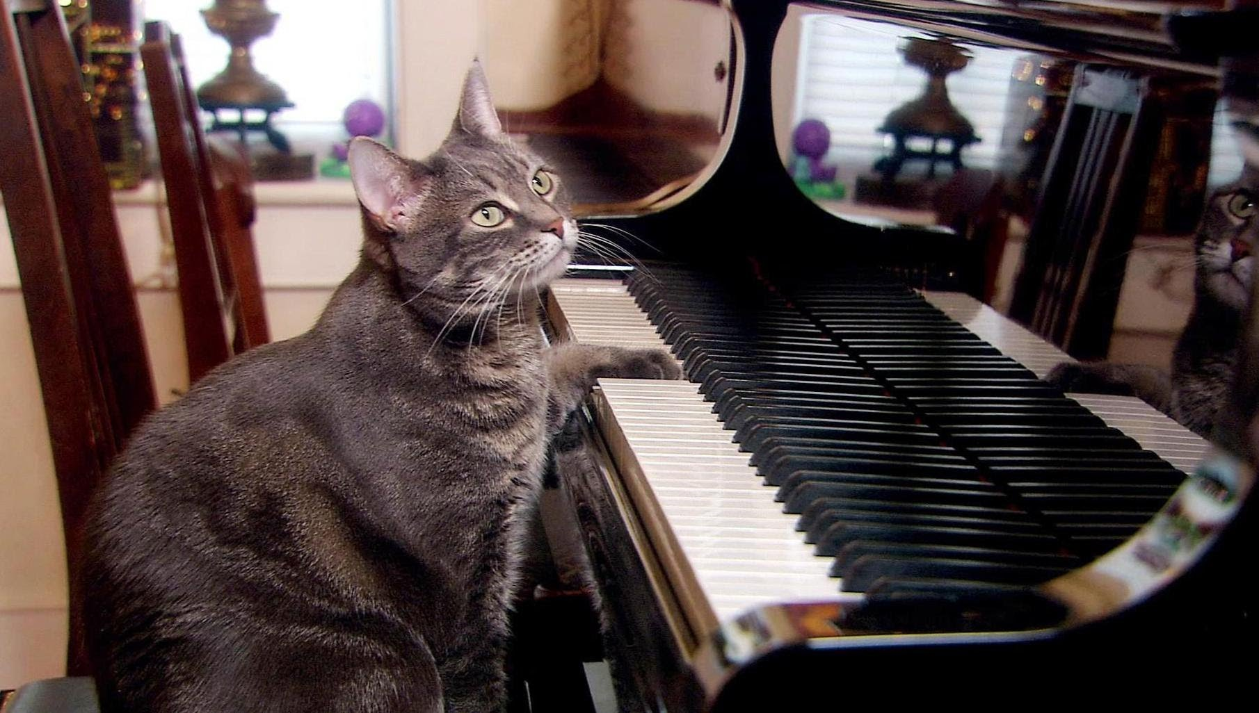 Cat Piano - Facts About