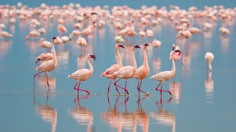 Flamingos - Facts About