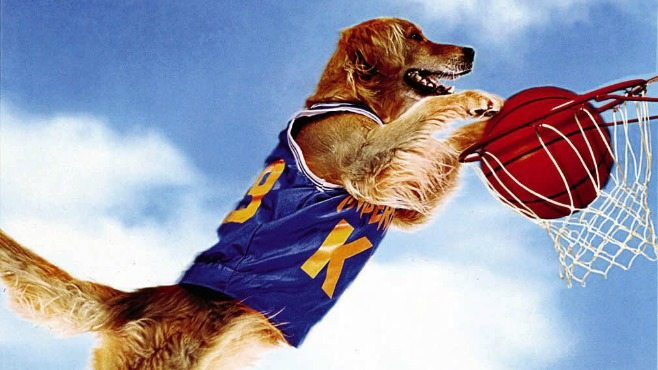 Air Bud Facts