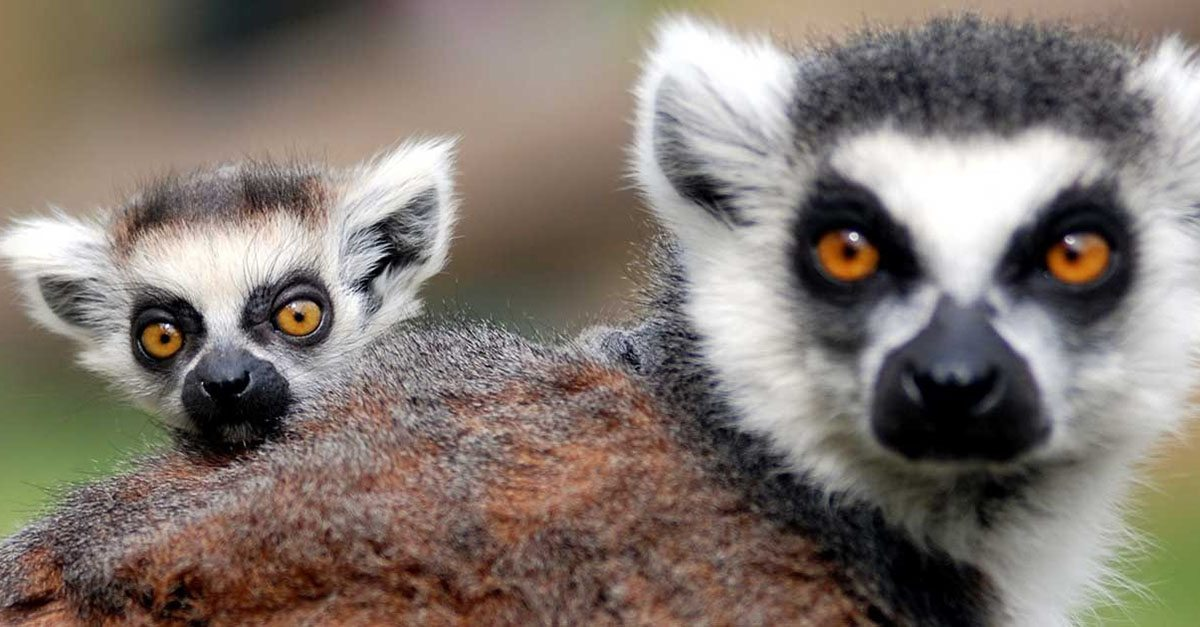 48 Wild Facts About Animals