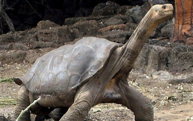 Animal Facts - Lonesome George