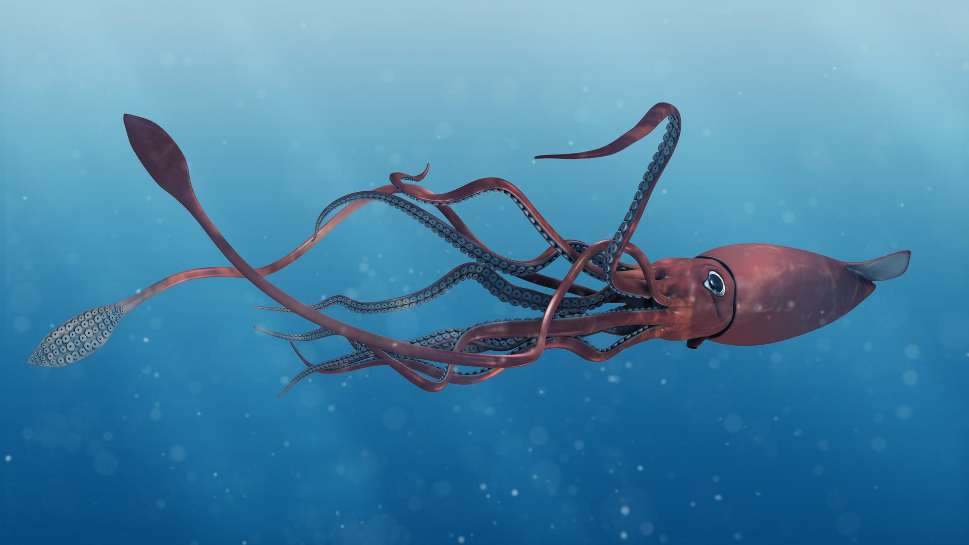 Animal Facts - Giant Squid