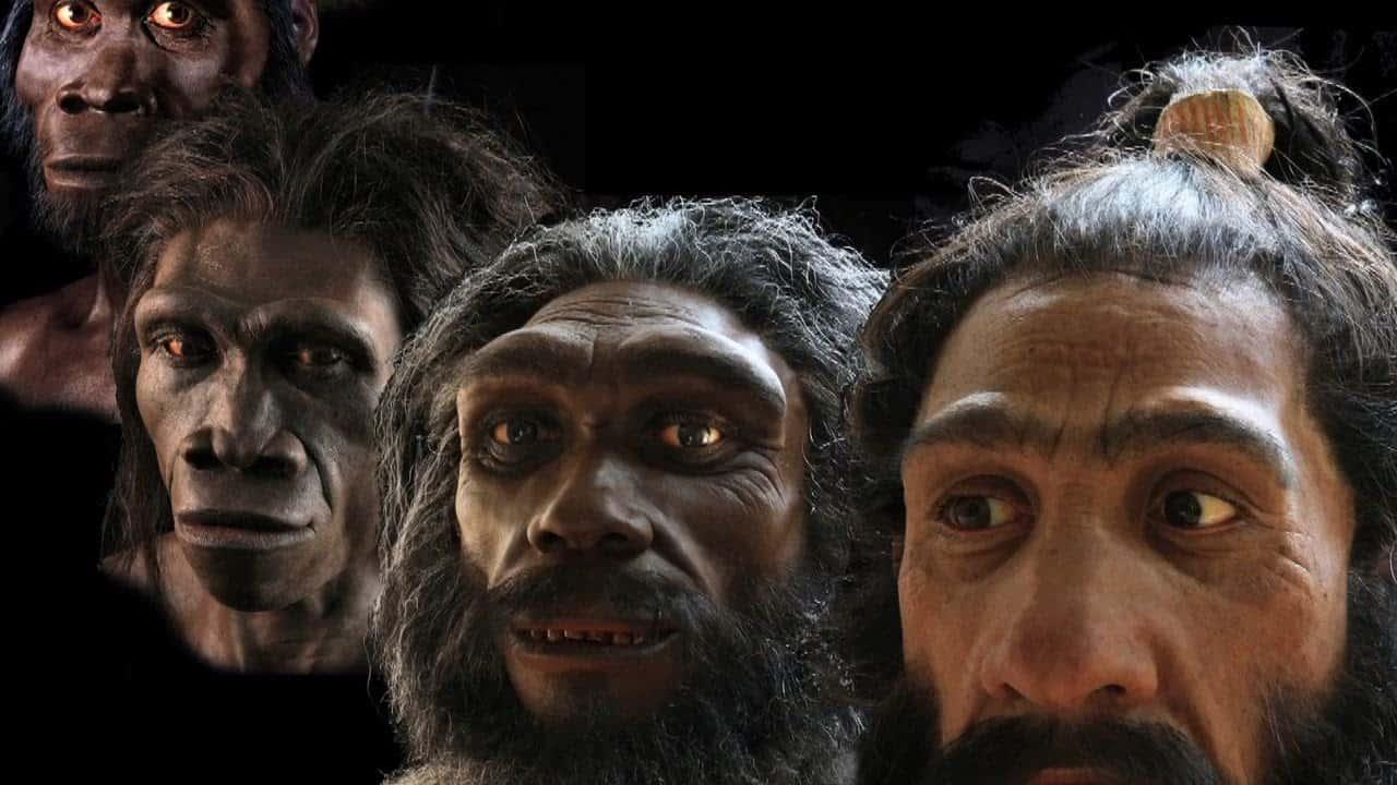 Human Evolution facts