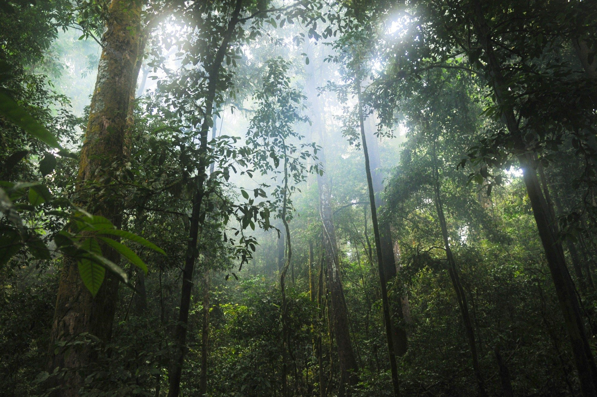 the difference between a jungle and a rain forest Rain-forest is the term for a woodland that receives more than about 80 of rain per year not all of them are tropical there are temperate rain.