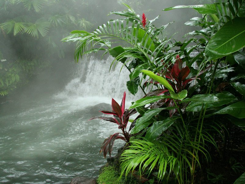 Tabacon Hot Springs, Arenal Volcano National Park, Costa Rica загрузить