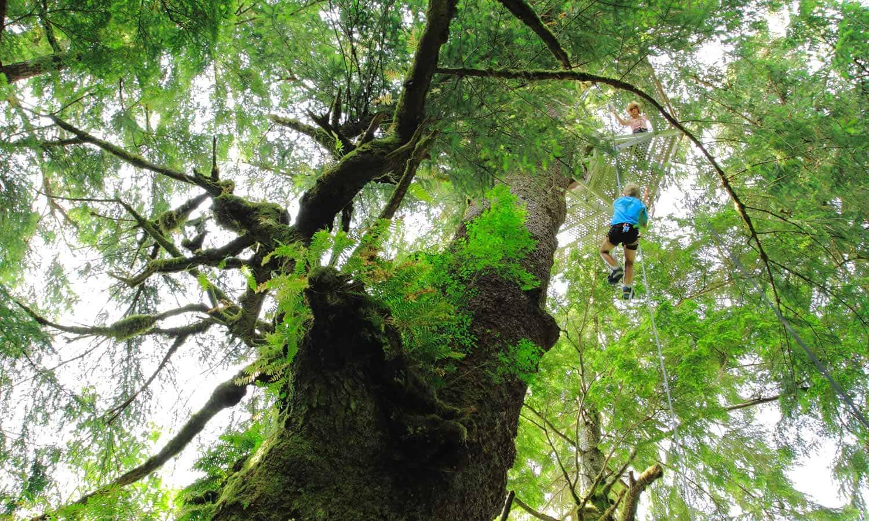 rare rainforest facts