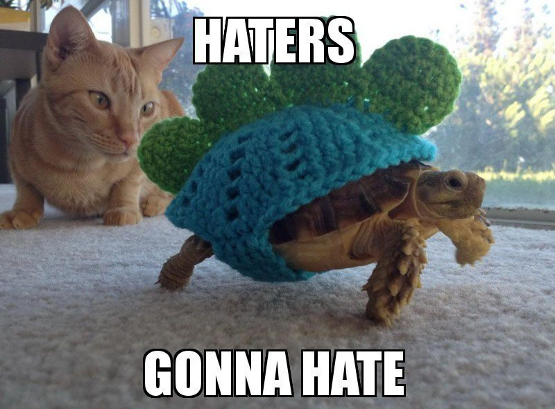 Tortoise Facts