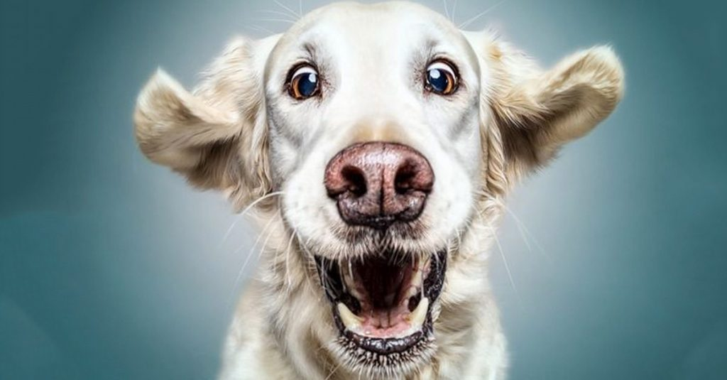 44 Pawesome Facts About Dogs