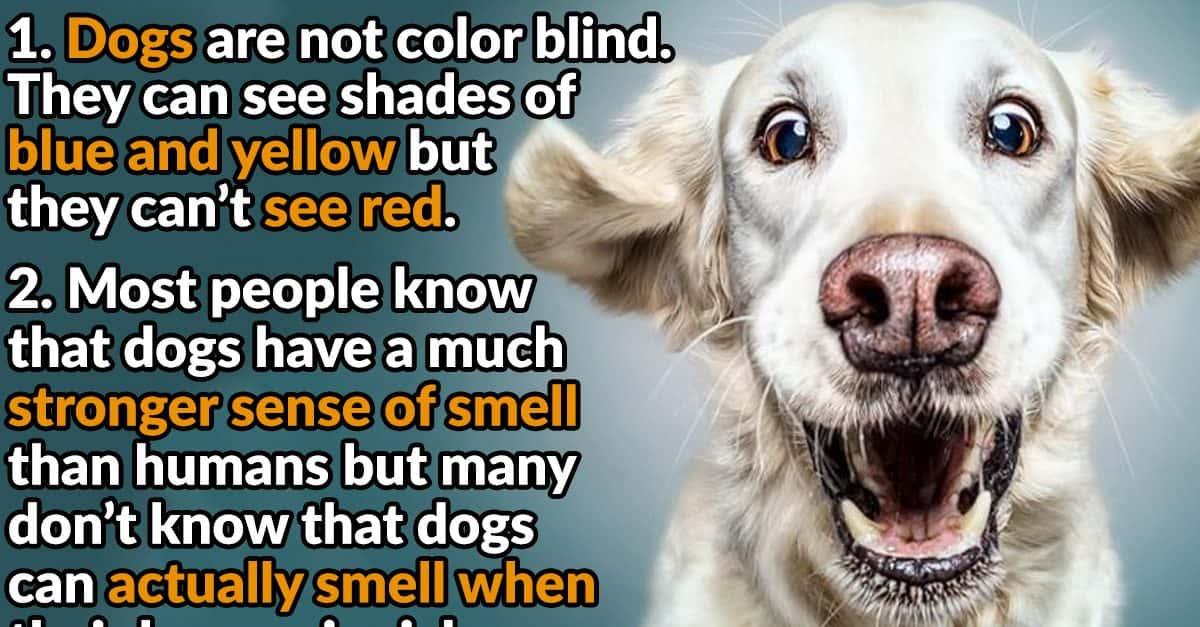 Dog Mask For Humans
