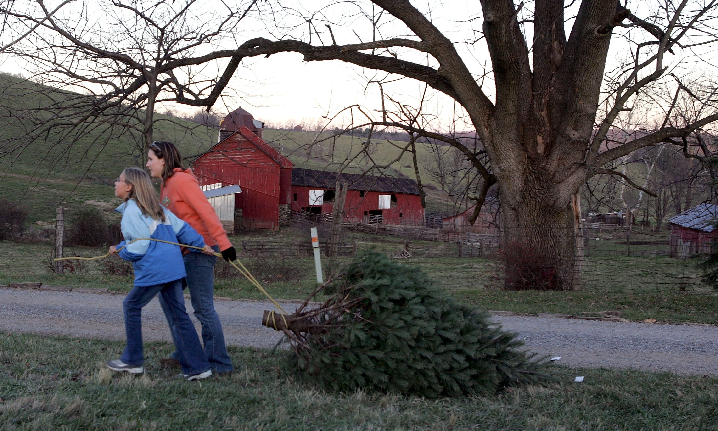 N. Virginia Faces Shortage Of Cut-Your-Own Christmas Trees