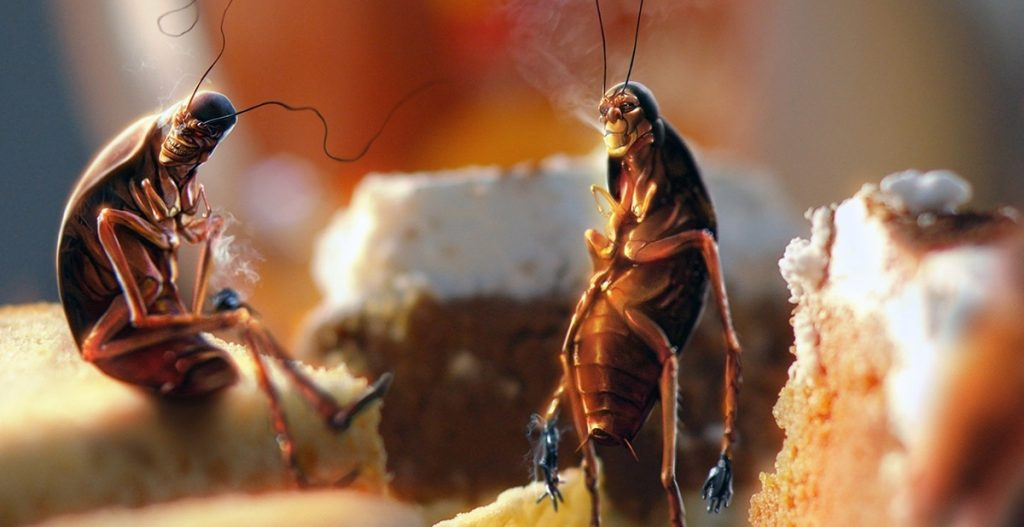 24 Facts About Bug Infestations