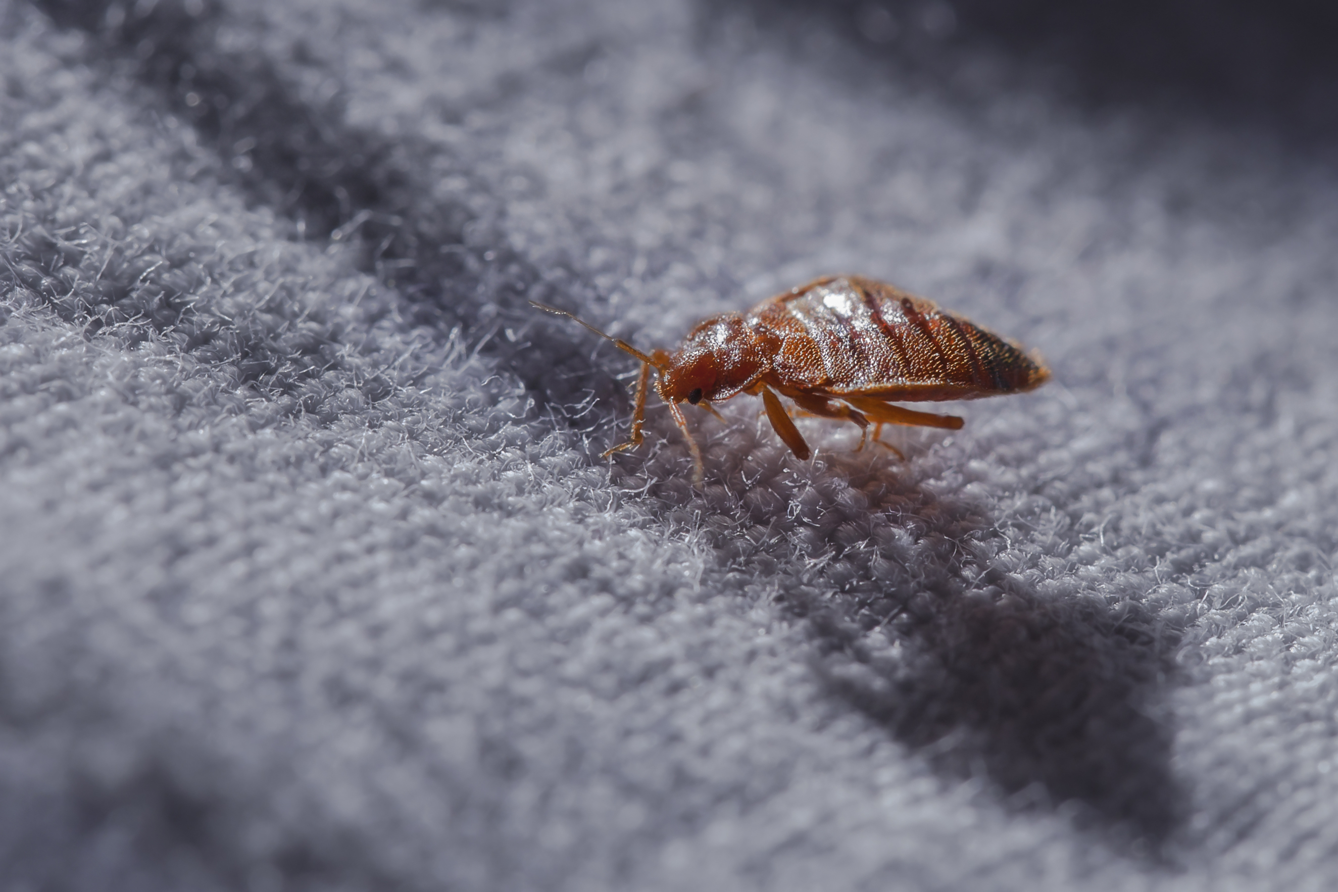 Bug Infestations facts