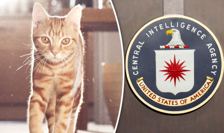 Declassified Information Facts