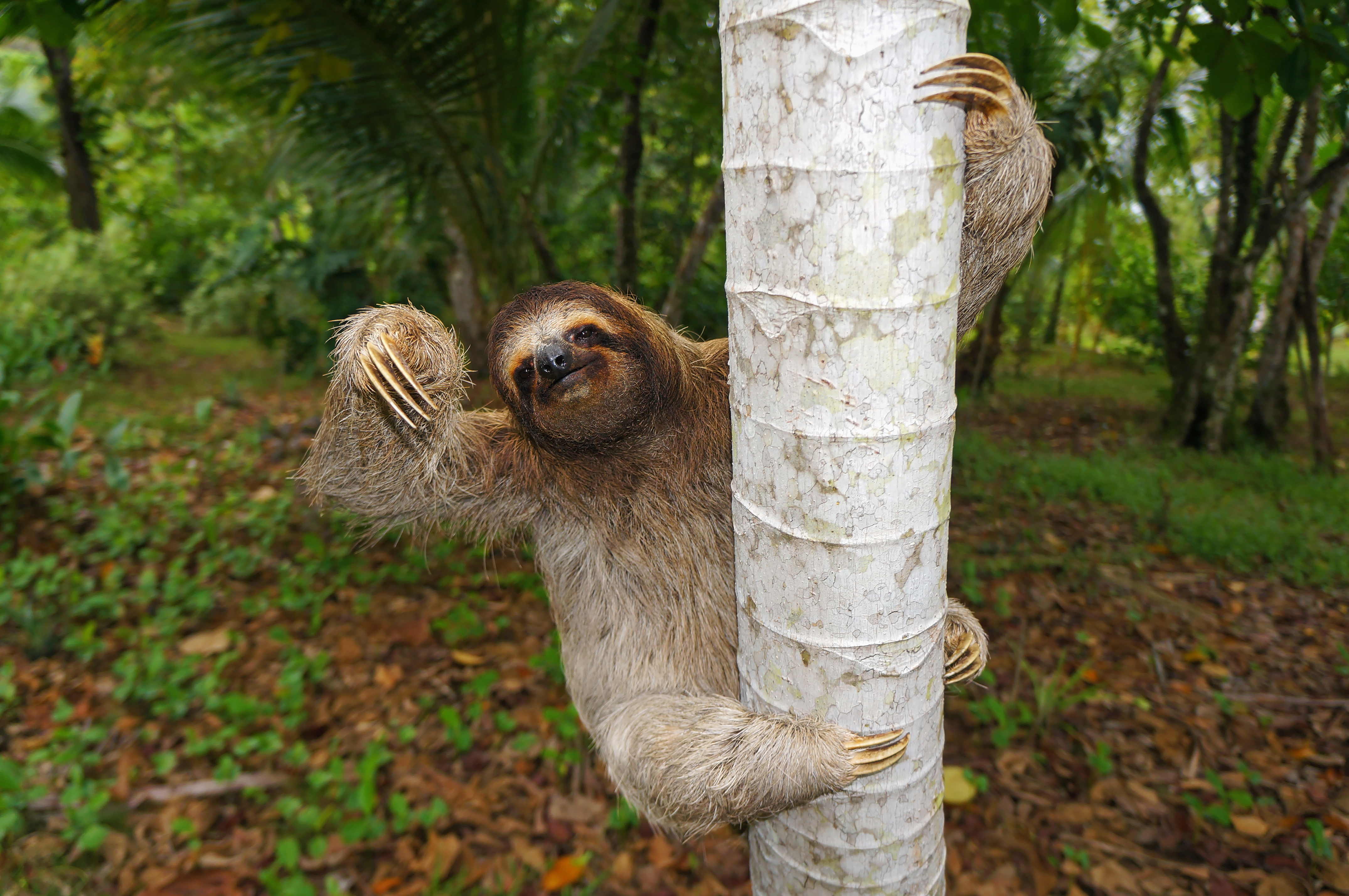 Sloths Facts