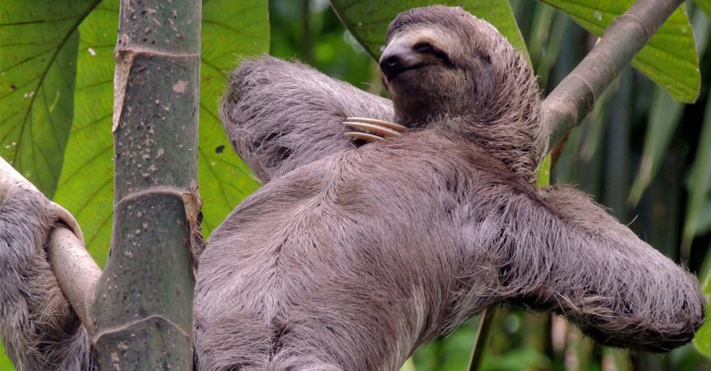 42 Slow Facts About Sloths