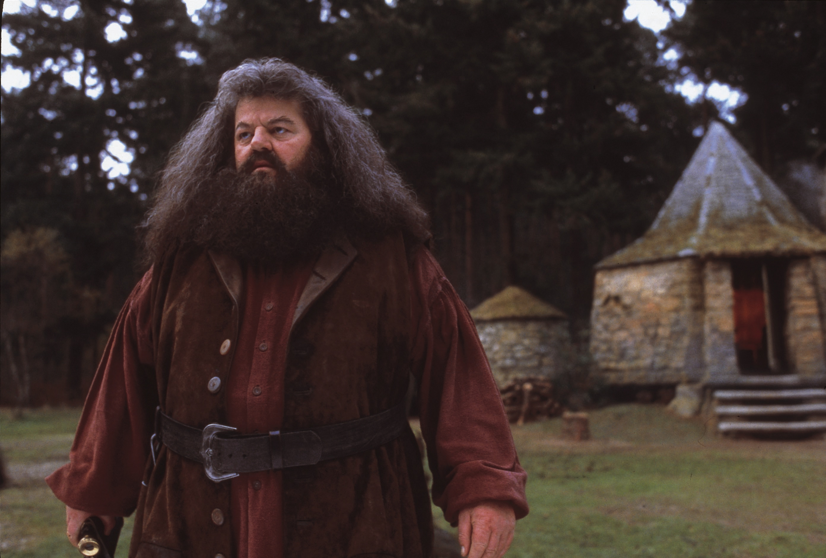 Image result for hagrid