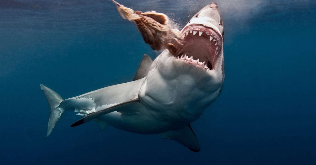 24 Terrifying Ocean Facts That Will Make You Re-think Ever Swimming Again