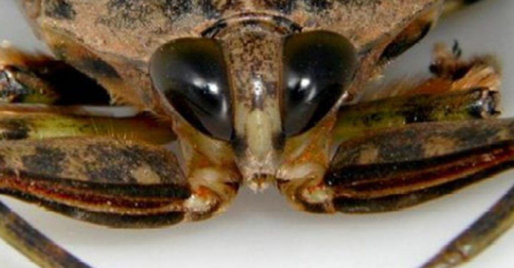 10 Of The World's Largest Insects