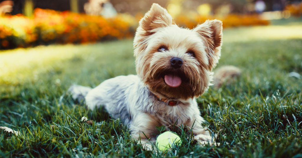 10 Pawesome Facts About Dogs