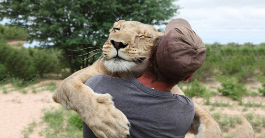 Lioness Gets Extremely Emotional After Reuniting With Her 'Adoptive Dad'