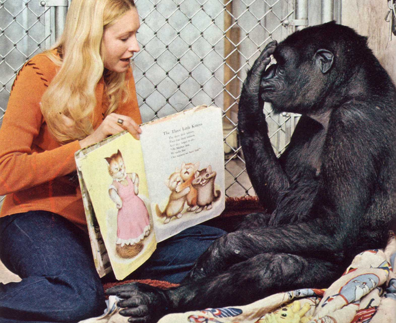 Koko The Gorilla Facts