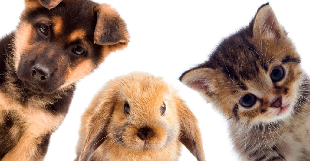 40 Irresistible Facts About Baby Animals