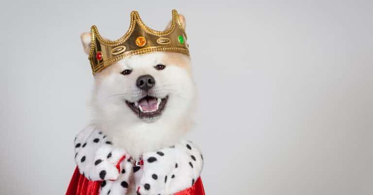 Royal Pets Facts