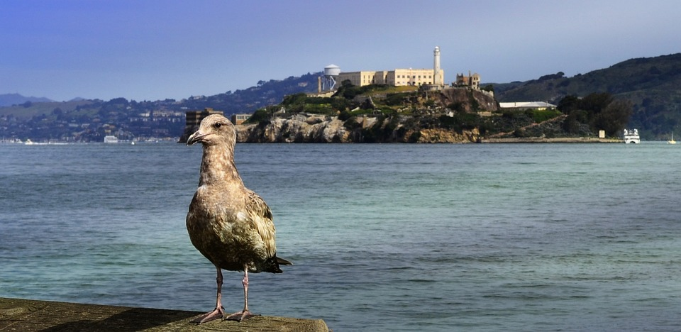 Alcatraz Facts