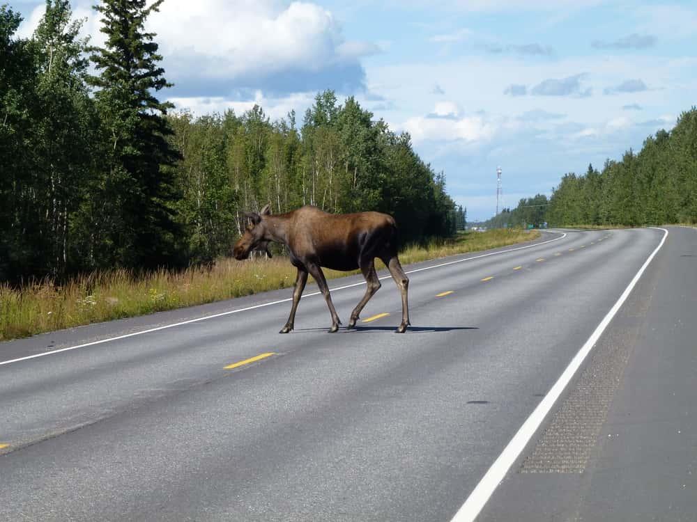 Weirdest Experiences On The Roads