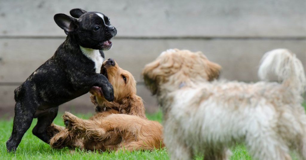 Why Do Dogs Howl? Inside Your Dog's Mind