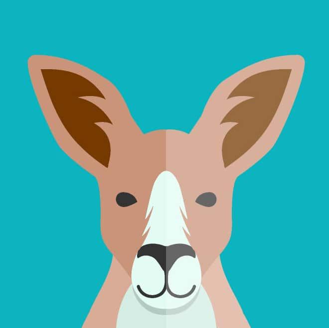kangaroo profile