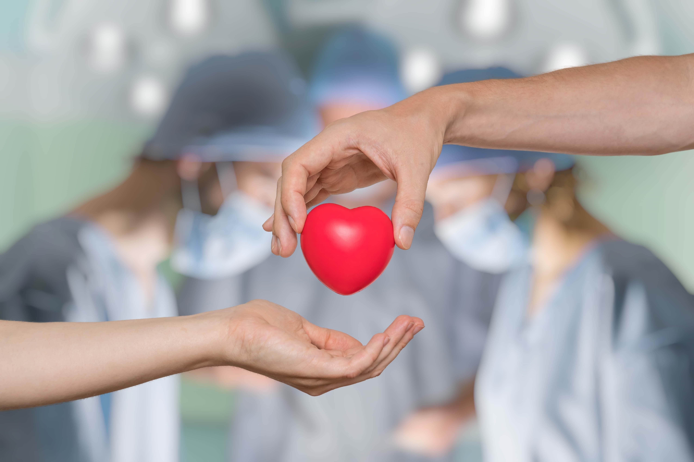 Organ Transplant Facts