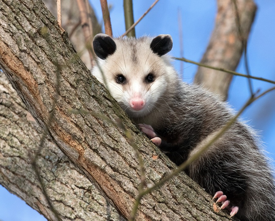 Surprising Animal Facts