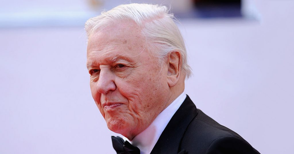 42 Worldly Facts About David Attenborough, The Voice Of The BBC