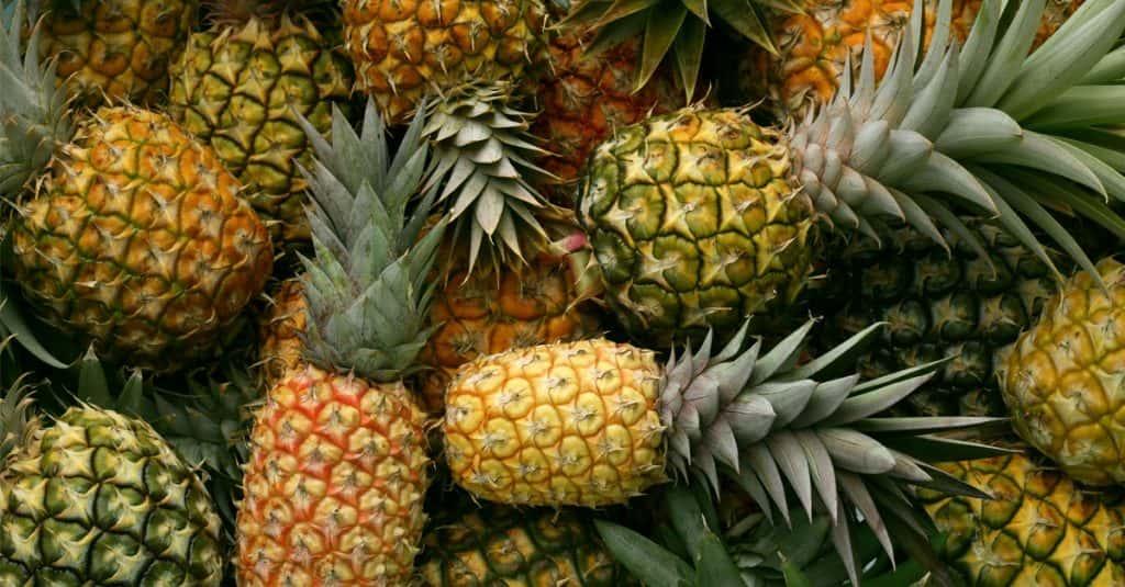 Bizarre Fads: Pineapples As Royal Status Symbols