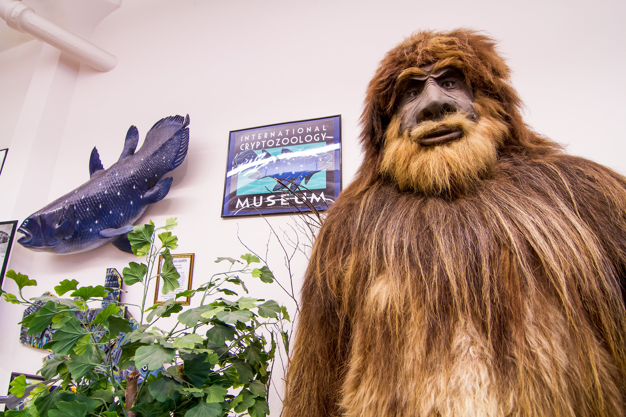 Cryptozoology Facts