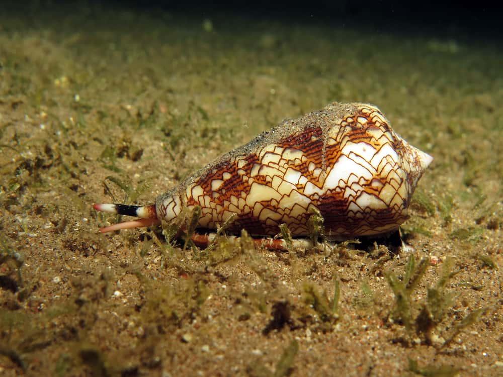 Deep Sea Dives